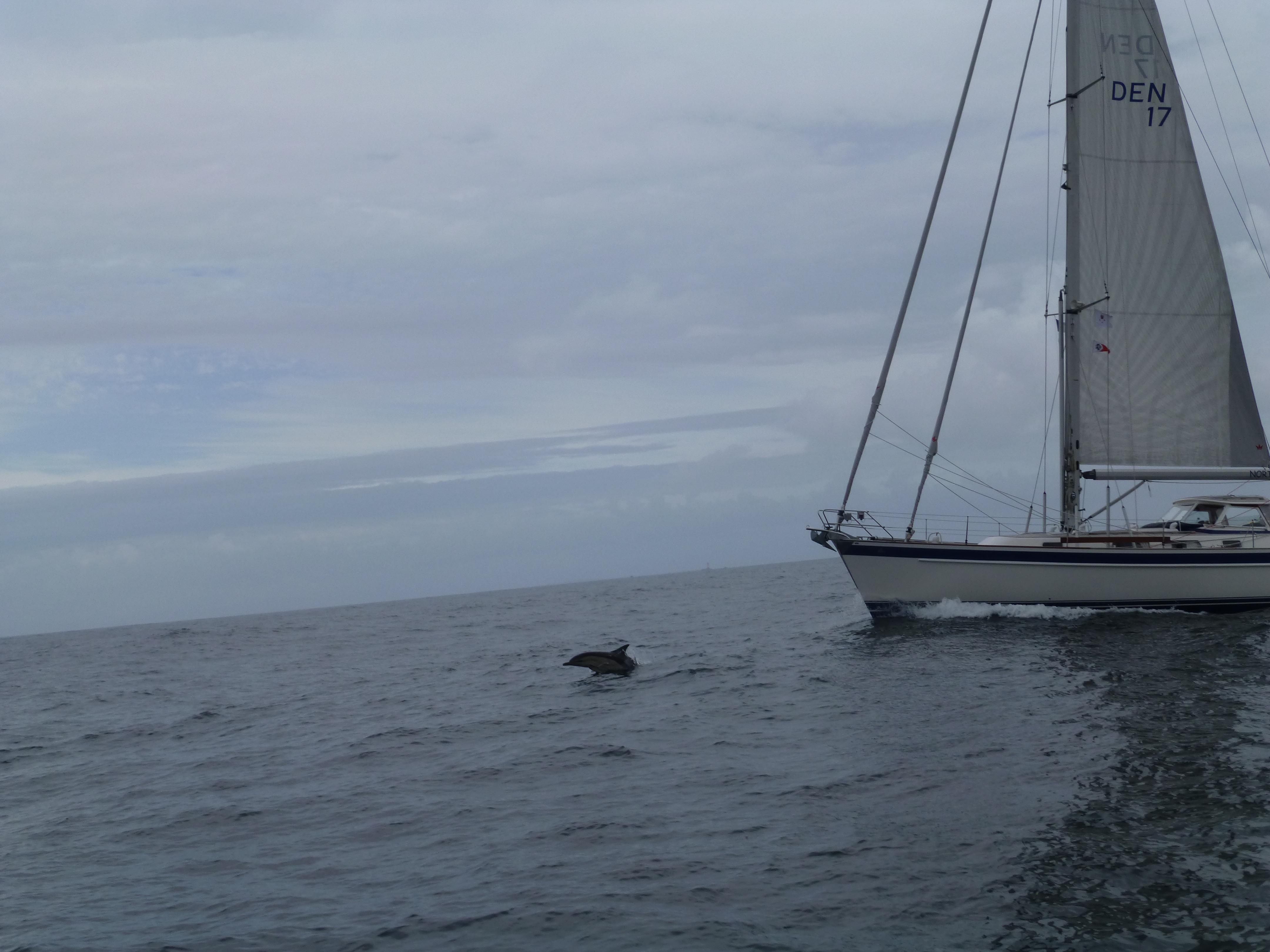 Delfin der springer foran North Star
